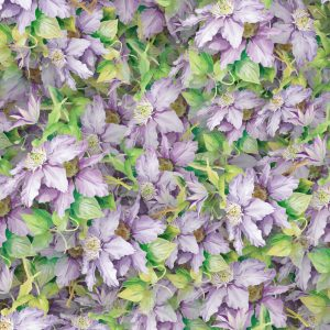 Bellflowers 22
