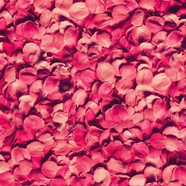 Flower Petals 22