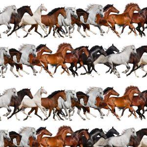 Running Mustangs 22