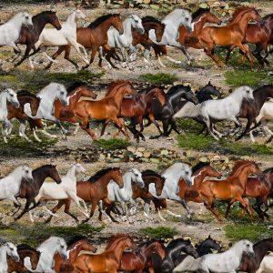 Running Mustangs 26